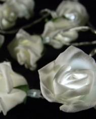 Roses PW