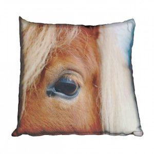Horse Eye Scatter